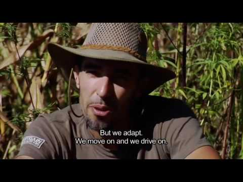 India Expedition Weed , Marijuana ,Cannabis