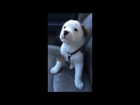 Pobre perro tierno se enfada por tener hipo
