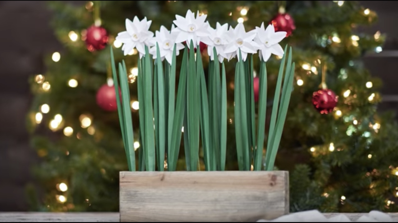 diy paperwhites lia griffith holiday flowers u0026 greens for joann