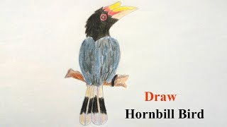 How to draw Hornbill bird step by step ||very easy||