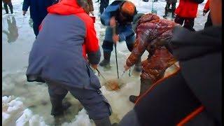 ЭТА РЫБА СОБРАЛА ВОКРУГ СЕБЯ ВСЕХ РЫБАКОВ на льду ПЕРВЫЙ ЛЁД 2018 2018 рыбалка видео ловли со льда