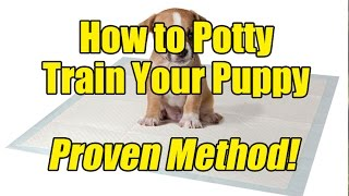 (Proven Method) How to Potty Train a Puppy?