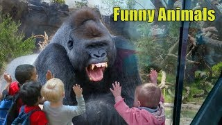 Funny Animals. Funny KIDS vs ZOO ANIMALS are WAY FUNNIER! - TRY NOT TO LAUGH