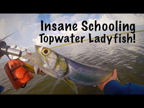Insane Schooling Topwater Ladyfish!