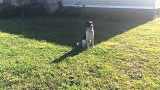 Rocky Road K9 Dog Training Myrtle Beach - Obedience Training
