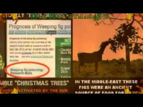 Why was Christmas banned in America until 1820 - YouTube