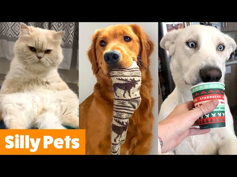 Silliest Animal Bloopers | Funny Pet videos