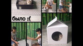 Домик для кошки MilkBox (Котофабрика) - сборка, отзыв
