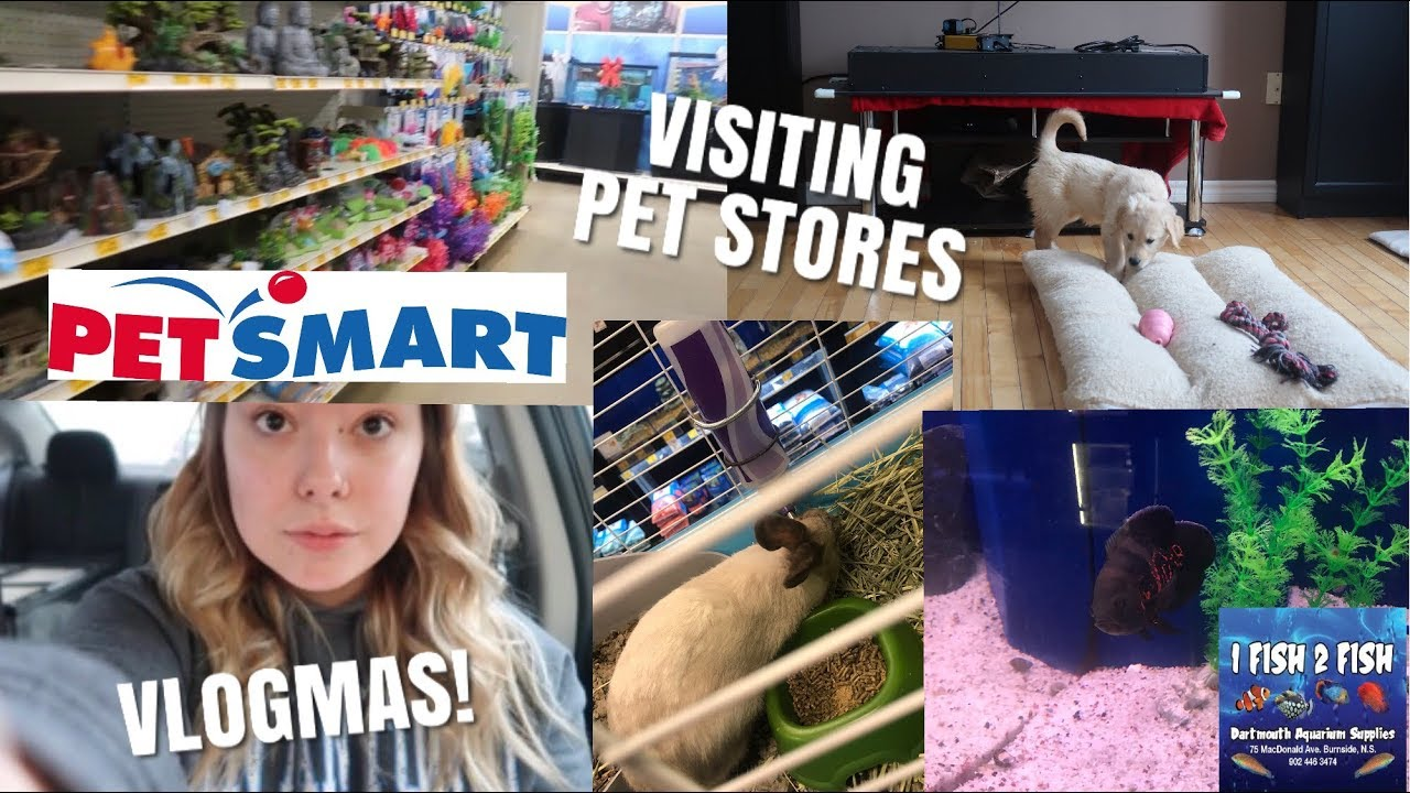visiting-pet-stores-being-attacked-by-a-puppy-vlogmas-day-1