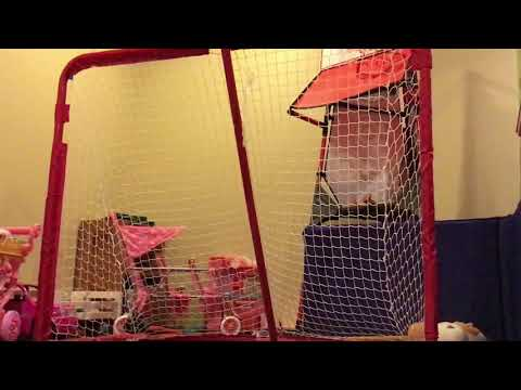 Hockey shots  toys craft and fun
