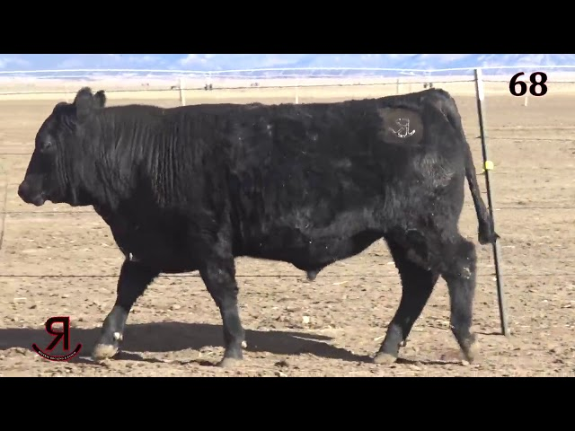 Reverse Rocking R Ranch Lot 68
