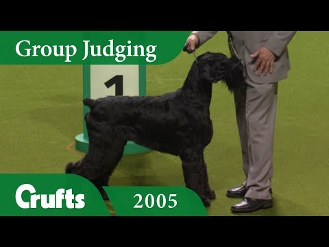 Giant Schnauzer wins Working Group Judging at Crufts 2005