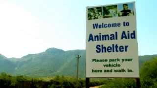 Indian Dog Rescue and Relief: Welcome to Animal Aid Unlimited, Rajasthan, India