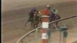Affirmed vs. Alydar - 1978 Preakness Stakes (8th Meeting)