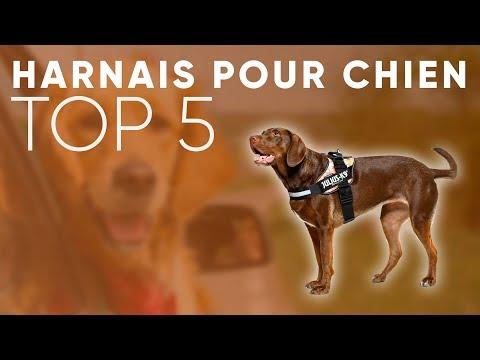 TOP5 : MEILLEUR HARNAIS POUR CHIEN