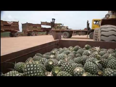 Gunung Sewu AgriBusiness Compliance Video (2.5 min)