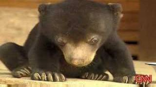 Repeat youtube video Sleepy Bear Can't Stay Awake