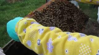 """разведение пчел (пчелосемей) способом """"на пол лета"""" для начинающих пчеловодов Часть перва"""