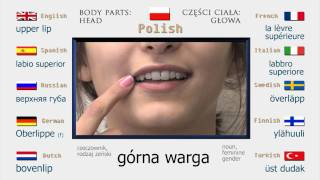 Vocabulary Build Up - Head: Polish (Betha III)