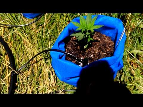 automatic watering system under 70 bucks