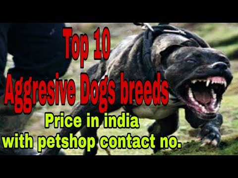 Top 10 Aggresive Dogs breeds price in india with petshop contact No.