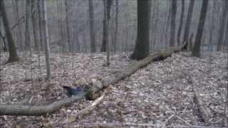 Shooting Turkeys!! Ohio 2013 Spring (SELF FILMED) Turkey Kill with Heartland Hitmen
