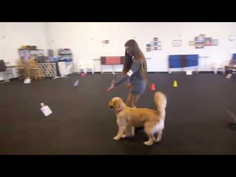AKC Rally Master Course at a Match