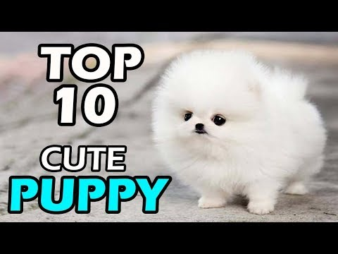 TOP 10 CUTE PUPPY BREEDS