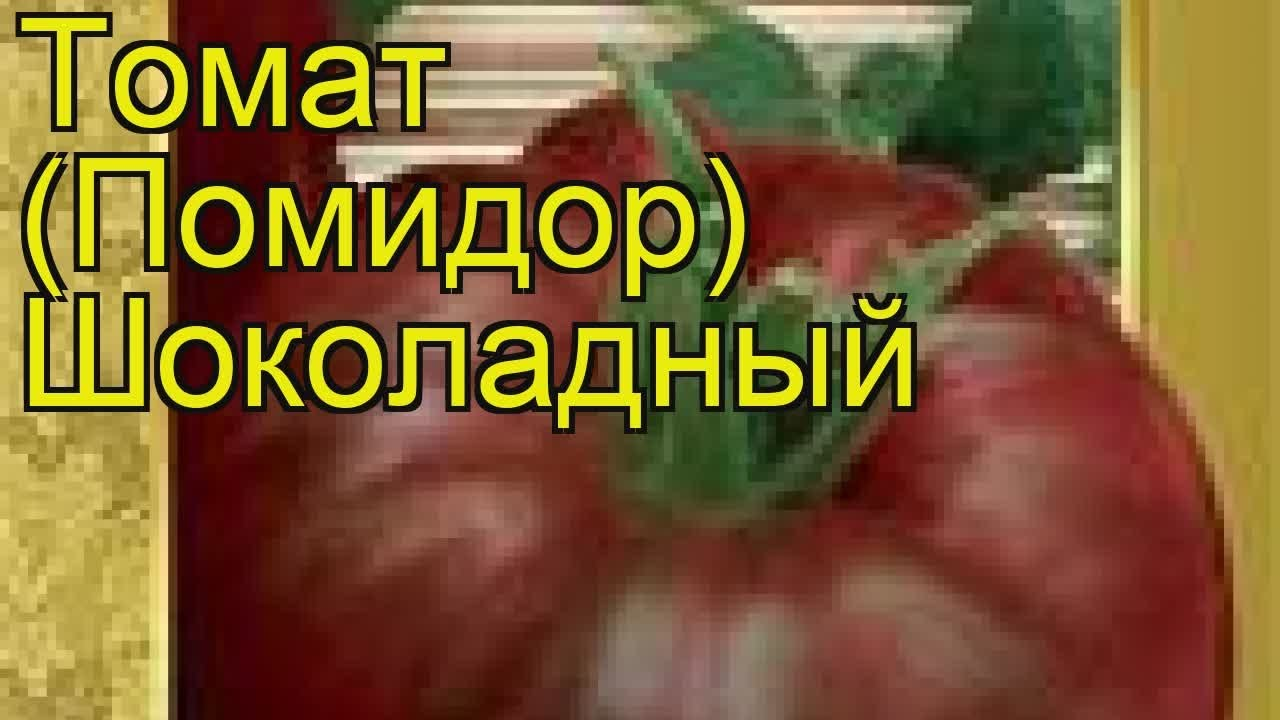 Томат Шоколадный: отзывы, фото, урожайность