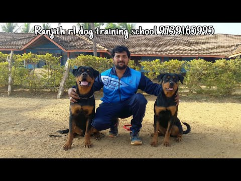 dog training in only one day
