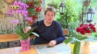 Цветущая орхидея - Цветочная лавка(Думаю, любой женщине будет приятно получить в подарок королевский цветок - орхидею. Правда, приобретая..., 2014-10-07T13:07:44.000Z)