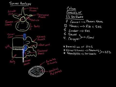 Spinal Cord Syndromes: Paramedic Trauma