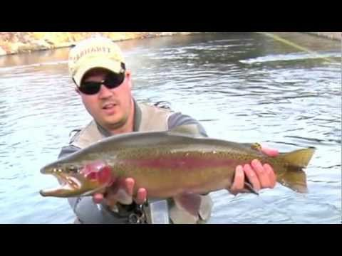 Truckee River Fly Fishing - Big Bow Midge'n