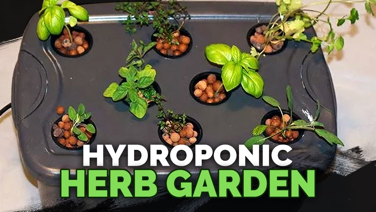 Hydroponic Herb Garden Guide YouTube