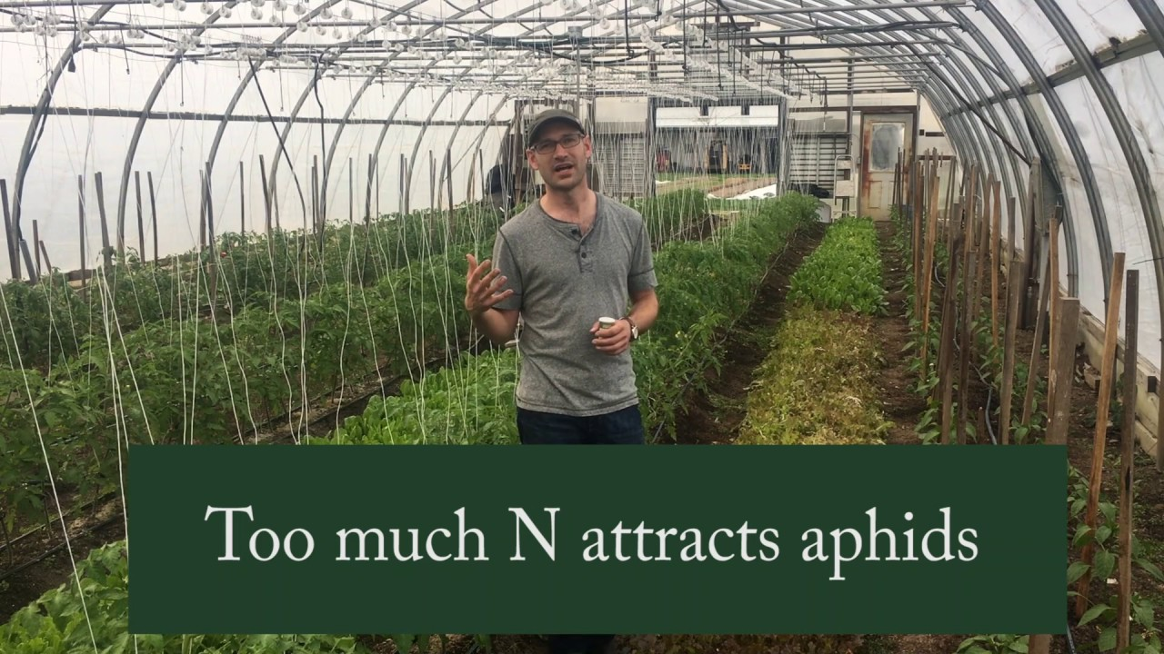 how to get rid of aphids in greenhouse
