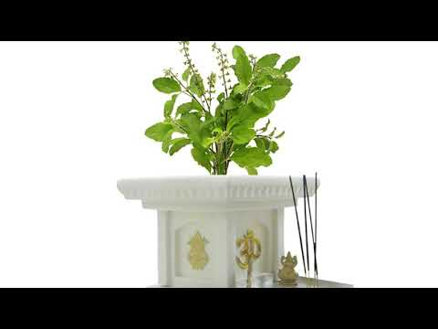 Tulasi Stotram - Everyday Prayer before Sacred Tulasi Plant