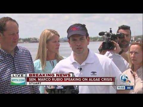 Senator Marco Rubio on algae crisis