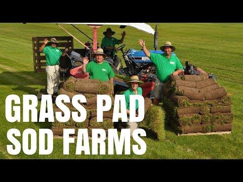 Harvesting Bluegrass Sod at Grass Pad Farm #5