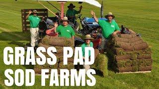 Harvesting Sod at Grass Pad Farm #5