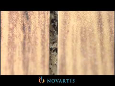 Wood Floors And Fleas Youtube