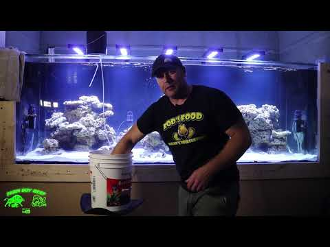 700 Gallon Phoenix reef tank build gets fish !!!!! I