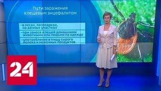 Пик активности клещей: как обезопасить себя от укуса - Россия 24
