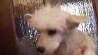 http://www.dog-search.biz/chai/