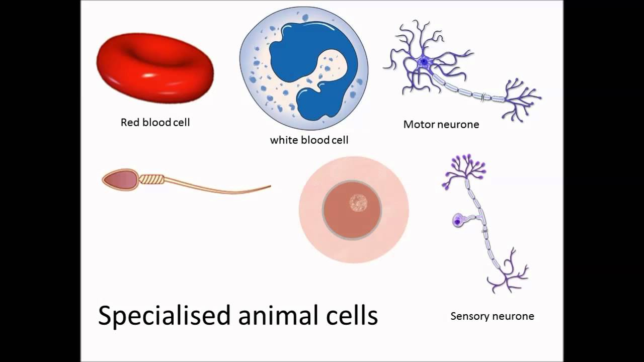 Watch on plant cell diagram labeled