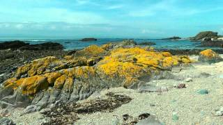 SCOTLAND highlanders and seals at the Kintyre coast (hd-video).
