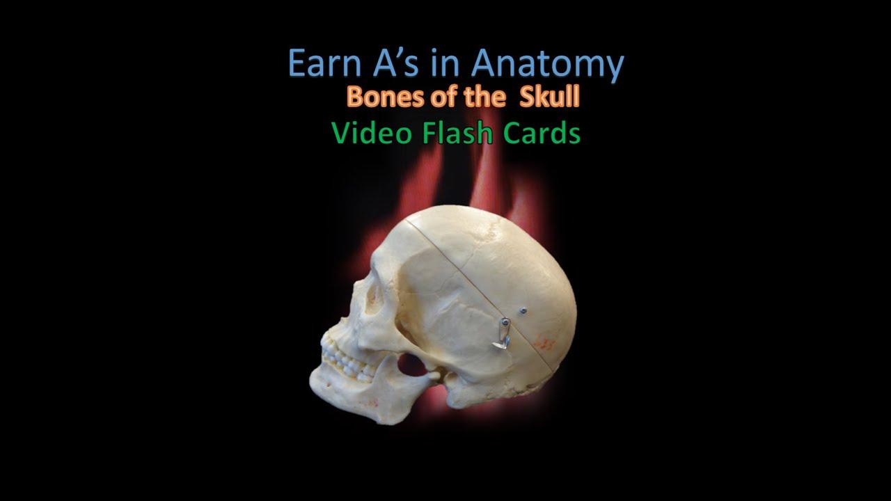 Bones of the Skull Flash Cards - YouTube