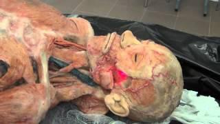 Анатомия. Мышцы головы и шеи