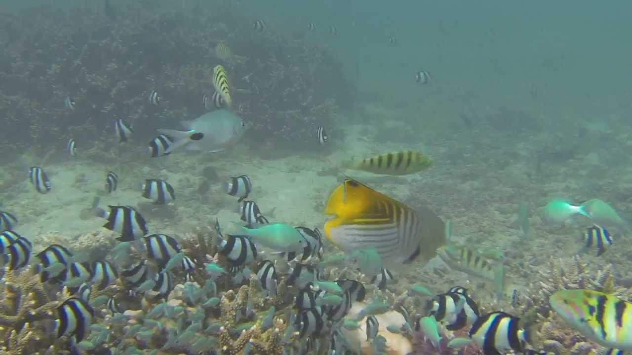 Repas des poissons du lagon de la saline les bains avec for Salin les bains