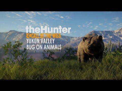 Баг на Животных The Hunter Call of The Wild. Долина Юкона