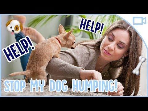 how-to-stop-your-dog-humping!